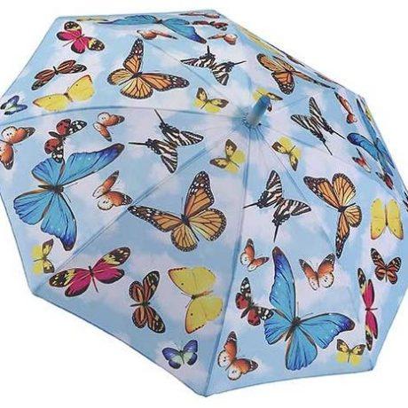 11600_Butterflys _open